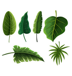 different types of tropical leaves vector image