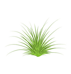 grass symbol icon design beautiful isolated on vector image