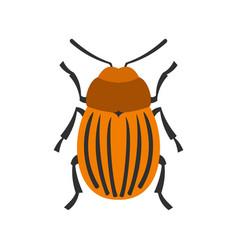 colorado beetle icon flat style vector image vector image