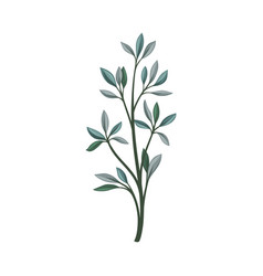 Branch with elongated pointed leaves vector
