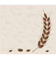 Ear of wheat vector image