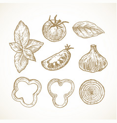 hand drawn vegetables and herbs vector image