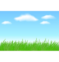 meadow grass vector image vector image