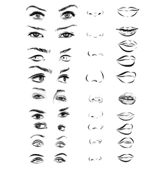 Set of woman eyes lips eyebrows and noses as vector