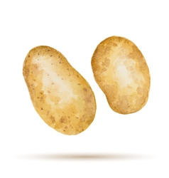 Watercolor handmade potato vector