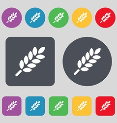 Wheat Ears Icon sign A set of 12 colored buttons vector image vector image