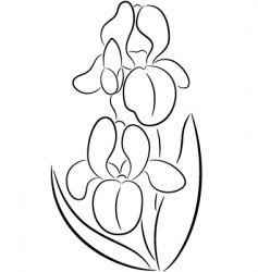 iris flower vector image