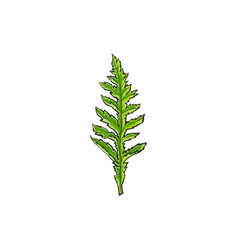 poppy flower leaf isolated vector image