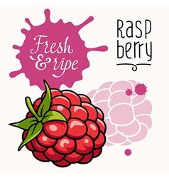 Raspberry concept 001 vector image