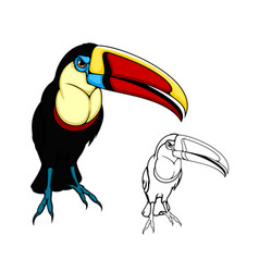 toucan bird exotic tropical jungle bird cartoon vector image