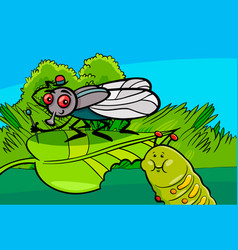 fly and caterpillar cartoon insect characters vector image
