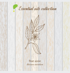star anise essential oil label aromatic plant vector image