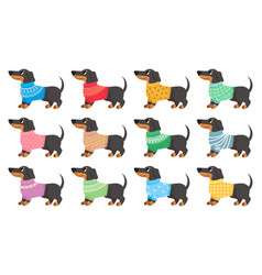 dachshund clothes dogs wear with trendy patterns vector image