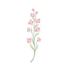 Pink flowers on a thin stalk vector