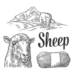 Sheep on meadow and yarn Vintage engraving vector