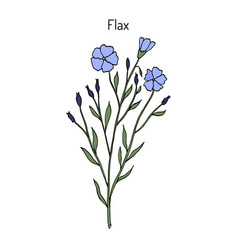 flax plant with flowers vector image