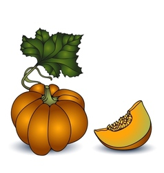 Autumn pumpkin on white background vector image