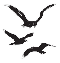 black silhouettes gulls and albatross vector image