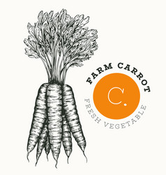 hand drawn sketch style carrot organic fresh food vector image