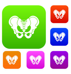 Pelvis set collection vector