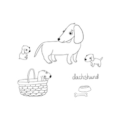 Set of cute dachshund in different vector