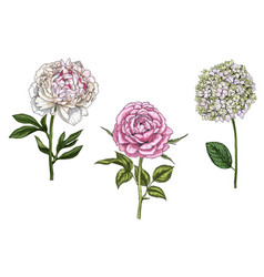 set with peony rose and phlox flowers vector image