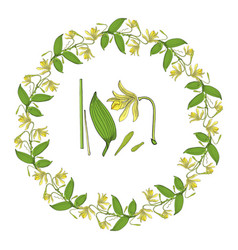 wreath from vanilla orchid flowers and leaves vector image