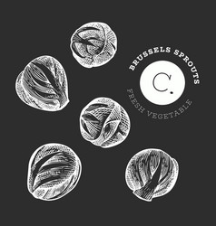 Hand drawn sketch style brussels sprout organic vector