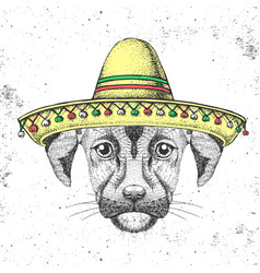 Hipster animal dog wearing a sombrero hat vector