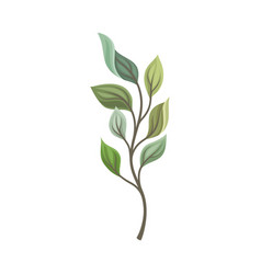 Leaves different shades on a thin stalk vector