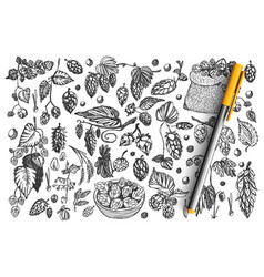 pine cones doodle set collection vector image