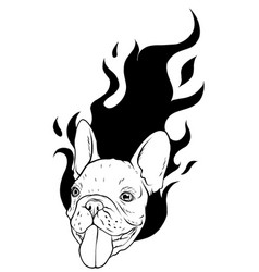 pug head carlino dog face vector image