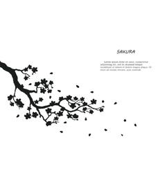 Black silhouette of sakura on a white background vector image vector image
