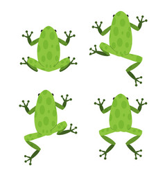 set of green frog in flat style with pattern vector image vector image