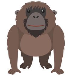brown orangutan with happy face vector image