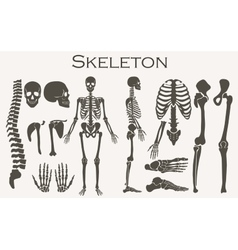 Human bones skeleton silhouette collection set vector image