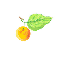 a bright apple vector image