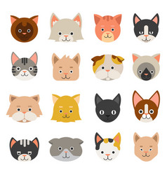 different faces cats vector image
