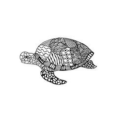 Entangle turtle vector