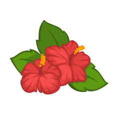 Flower hibiscus rose blossom bud or bloom vector