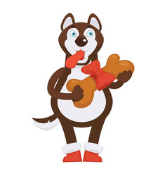 Husky dog in red boots holds huge bone in ribbon vector