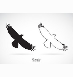 eagle is spreading its wings on white vector image vector image