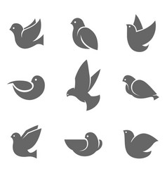 dove grey silhouette on white vector image vector image