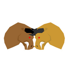 battle bull bullfight two bulls to butt vector image