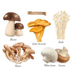 edible mushrooms porcini golden chanterelle enoki vector image