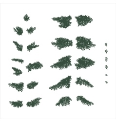 Fir branches set in flat colors vector