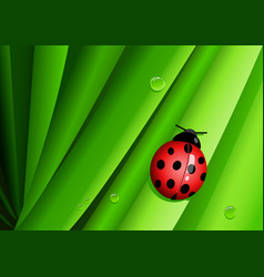 Graphic of a lady bug on green leaves vector