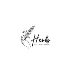 herbs logo template nature herbs logo concept vector image