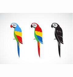 parrot design on white background bird icon vector image