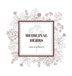 Medicine plant decorative background vector image